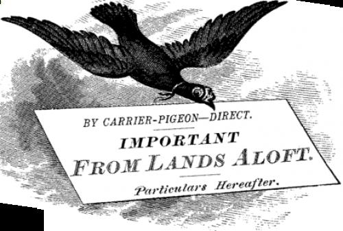 vintage carrier pigeon