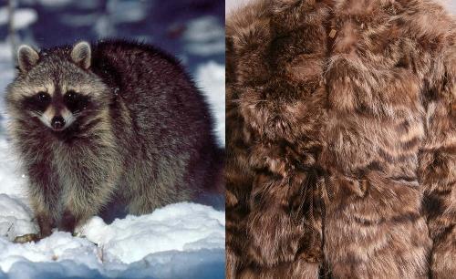 vintage raccoon fur