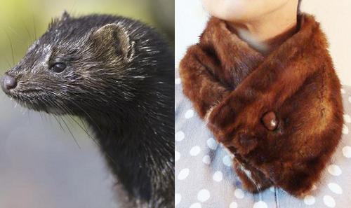 vintage mink fur