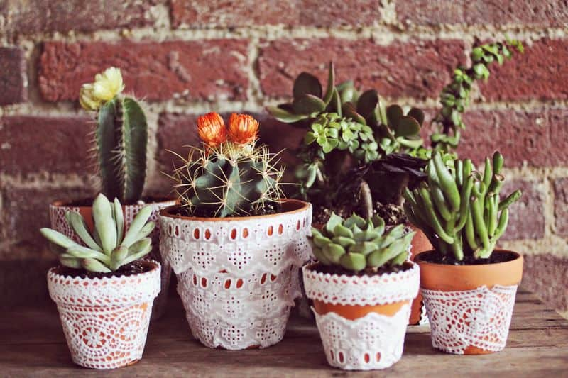 6 Creative DIY Ways To Display Houseplants